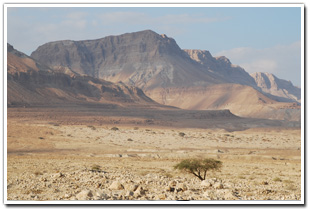 The Desert Wasteland of Israel